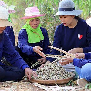 moringa-grown-fields-thailand-organic-02_sm