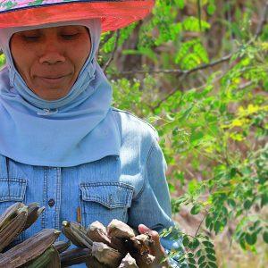 moringa-grown-fields-thailand-organic-3_sm