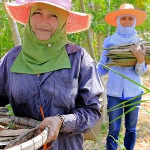 moringa-grown-fields-thailand-organic-4_sm