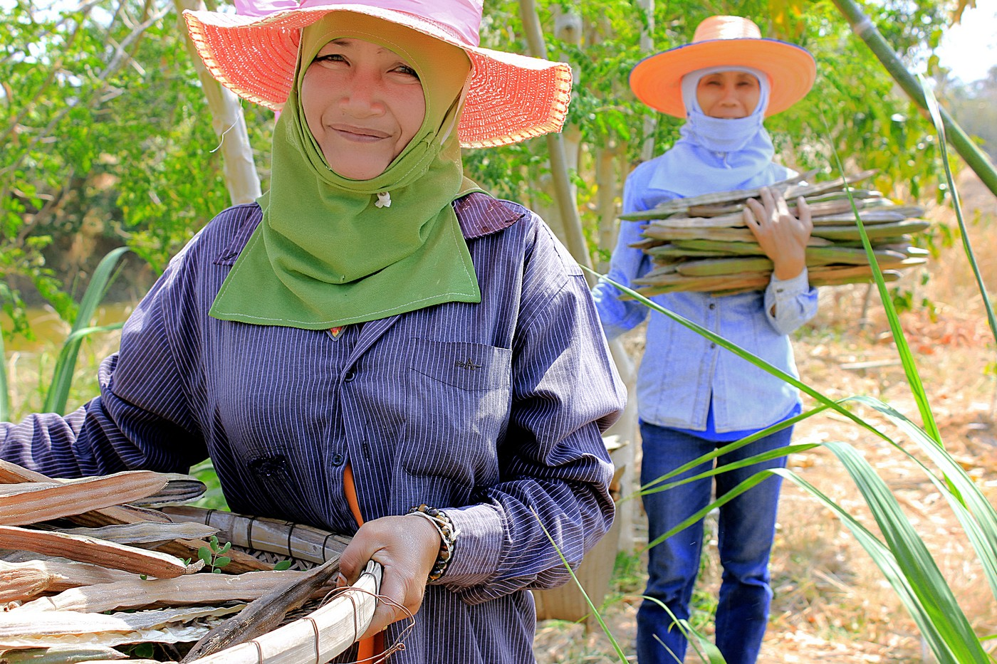 moringa-grown-fields-thailand-organic-4_sm